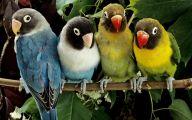 3D Love Birds  11 Hd Wallpaper