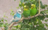 3D Love Birds 15 Background Wallpaper