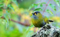 3D Love Birds  15 Hd Wallpaper