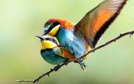 3D Love Birds 2 Desktop Background