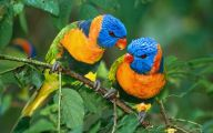 3D Love Birds 26 Desktop Background