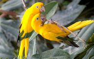 3D Love Birds 3 Background