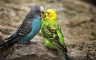 3D Love Birds  4 Cool Hd Wallpaper