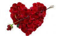 Free Heart Wallpaper Downloads 28 Hd Wallpaper