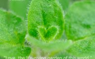 Love Hearts In Nature 11 Free Wallpaper