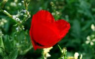 Love Hearts In Nature 27 Desktop Background