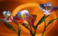 Romantic Love Flowers Pictures  11 Widescreen Wallpaper