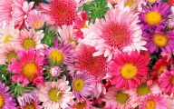 Romantic Love Flowers Pictures  13 Widescreen Wallpaper