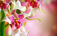 Romantic Love Flowers Pictures  19 Cool Hd Wallpaper