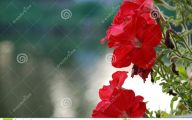 Romantic Love Flowers Pictures  26 Cool Wallpaper