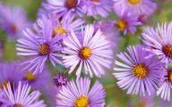 Romantic Love Flowers Pictures  33 Desktop Background