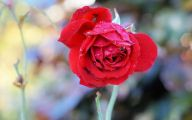 Romantic Love Flowers Pictures  36 Background