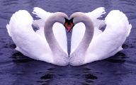 Valentine Love Birds Quotes  29 Widescreen Wallpaper