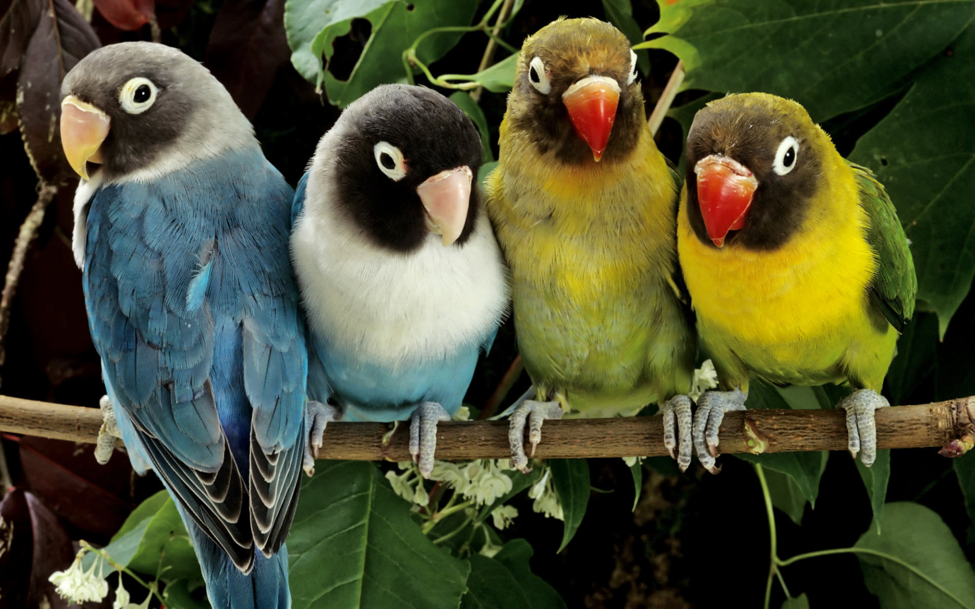 3D Love Birds 11 Hd Wallpaper - Hdlovewall com