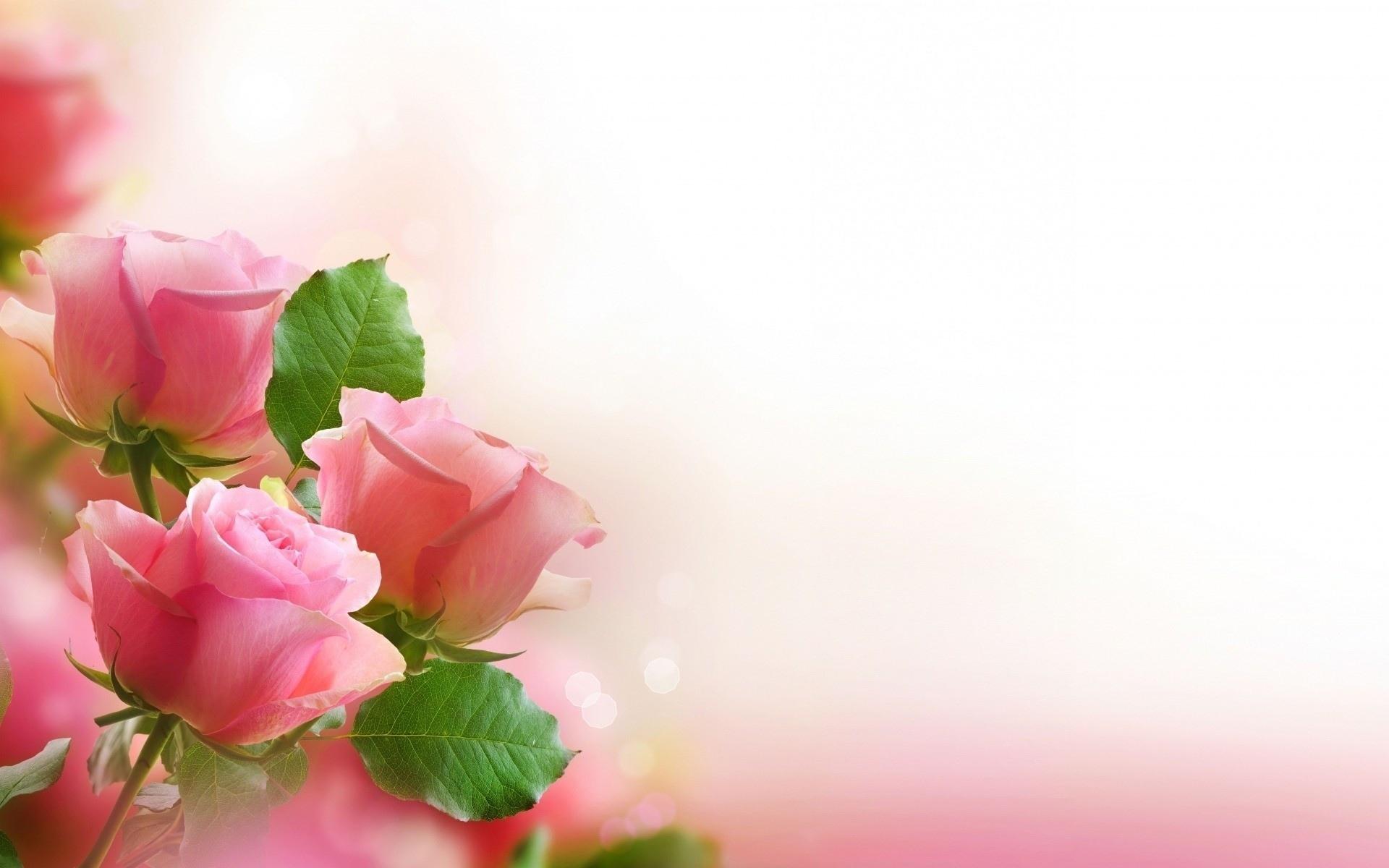 Amazing Wallpaper Love Flower - romantic-love-flowers-pictures-4-cool-hd-wallpaper  Gallery_808980.jpg