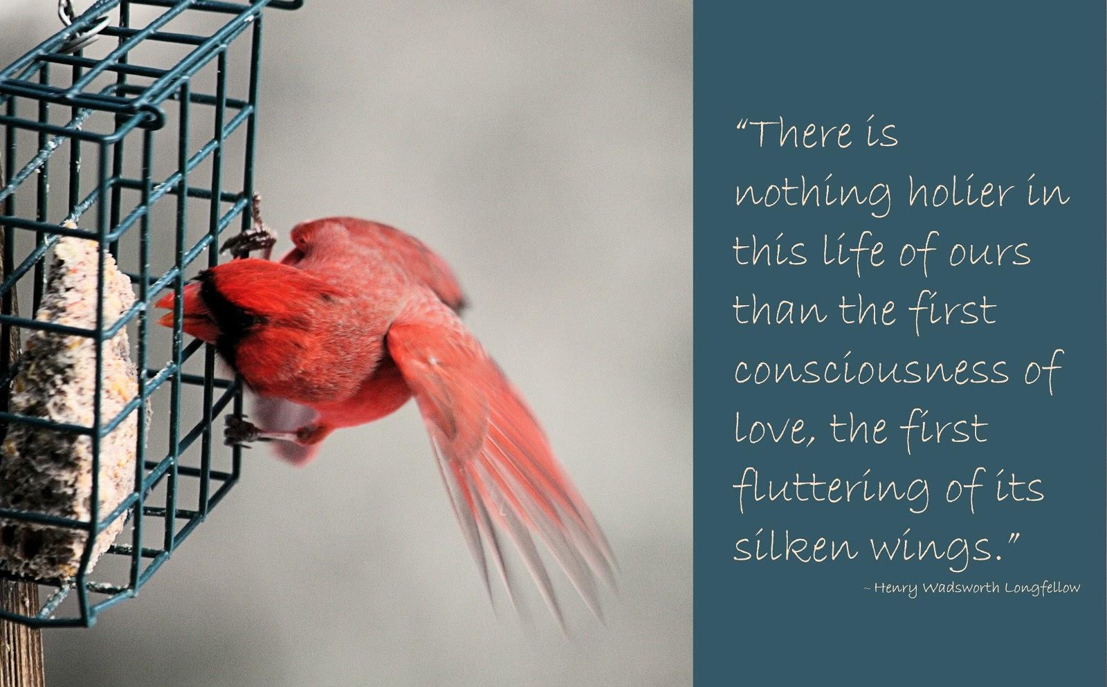 Love Bird Quotes Valentine Love Birds Quotes 25 Desktop Background  Hdlovewall