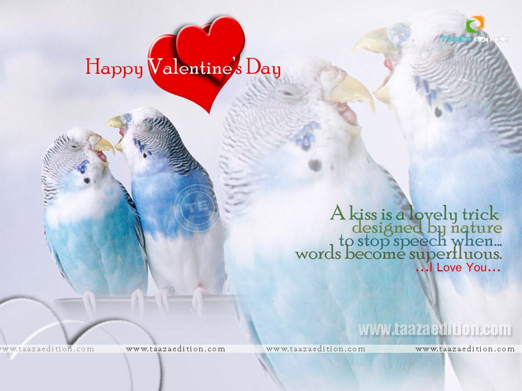 Valentine Love Birds Quotes HD Wallpaper   Valentines
