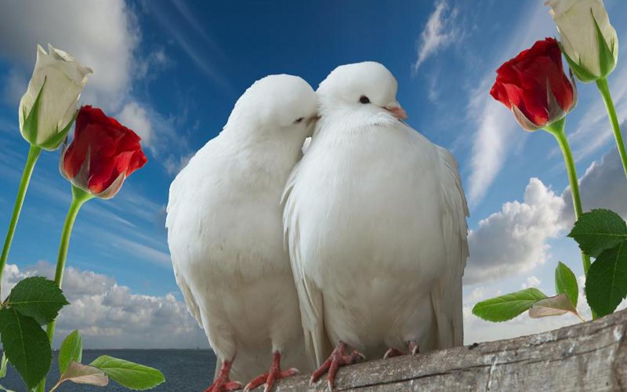 3d Love Birds 18 Free Wallpaper Hdlovewall Com