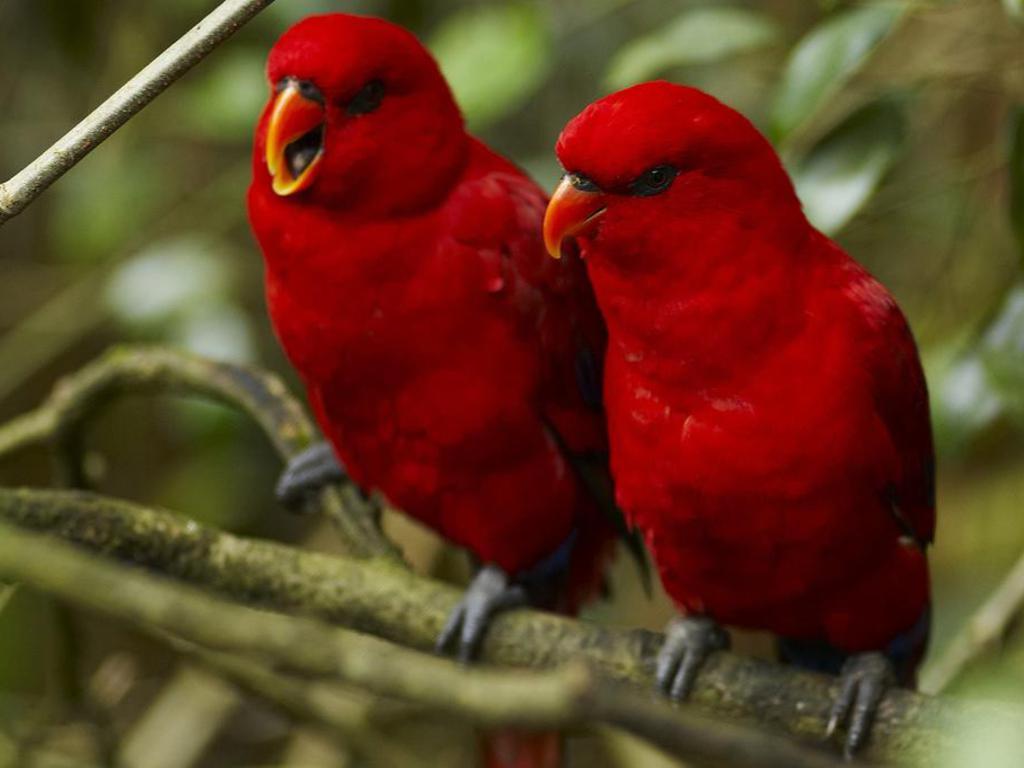 3d Love Birds 23 Desktop Background Hdlovewall Com