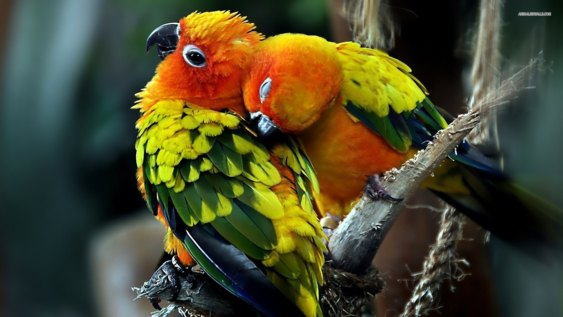 3d Love Birds 38 Desktop Background Hdlovewall Com