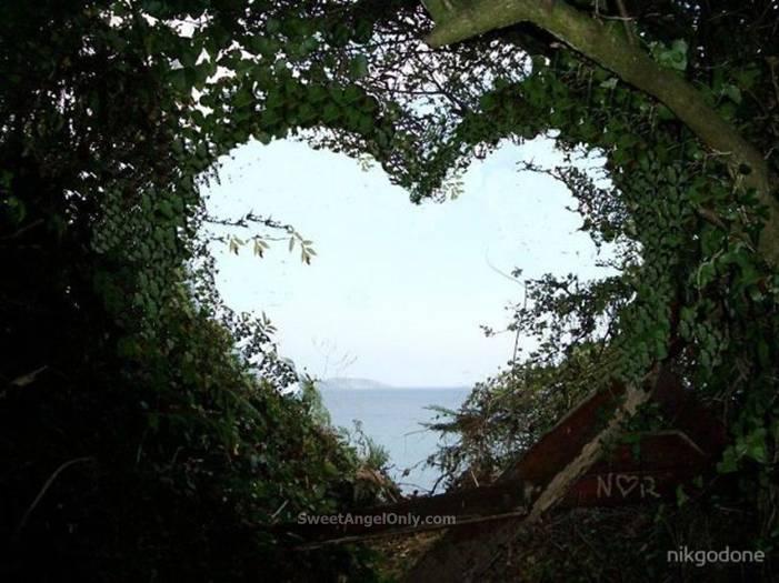 love hearts in nature 30 widescreen wallpaper